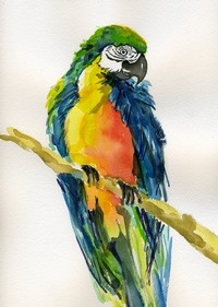 Multicolored Parrot